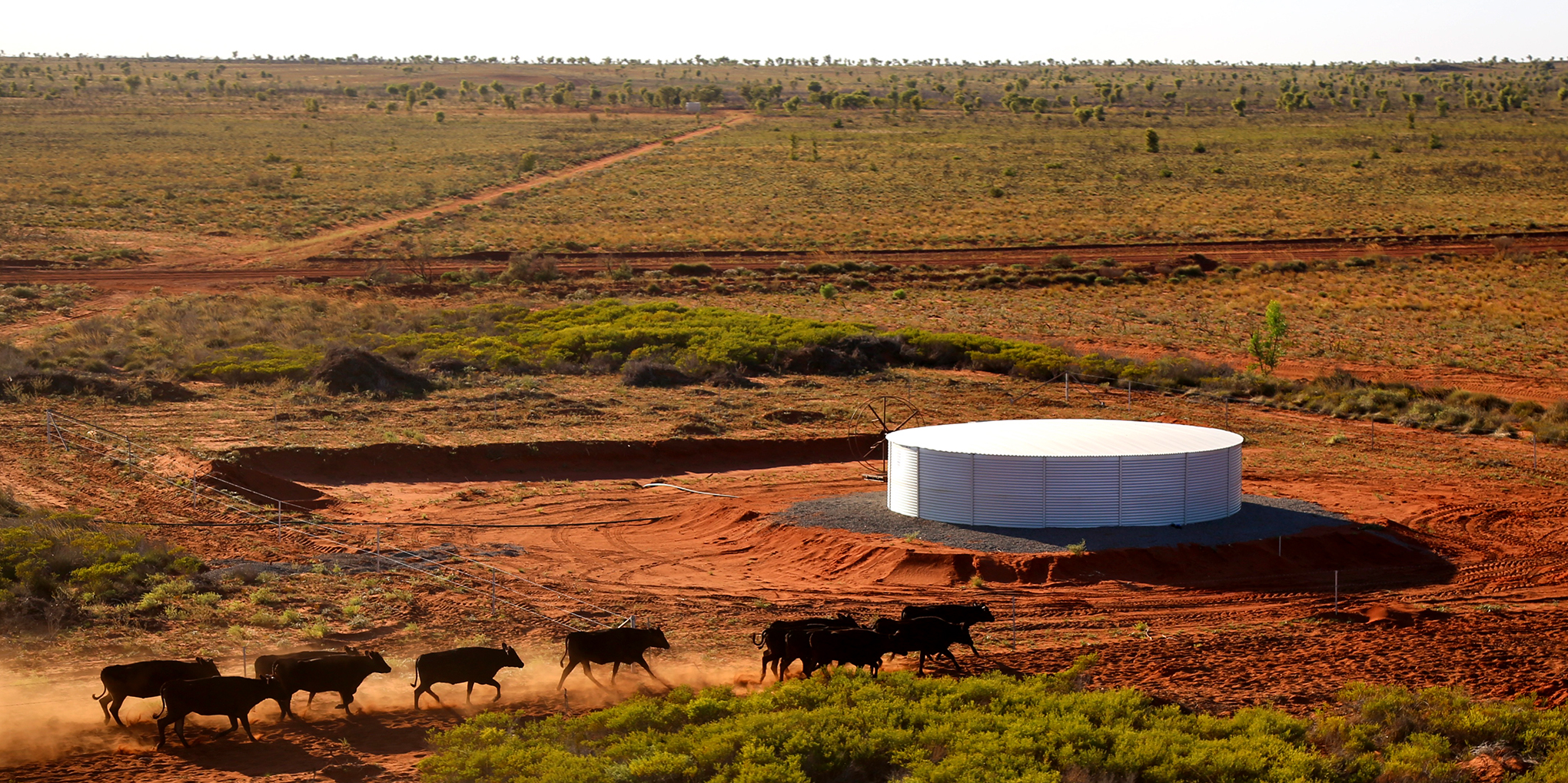 cattle in front of a steel type of water tank